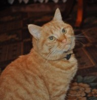 ginger_cat_200922